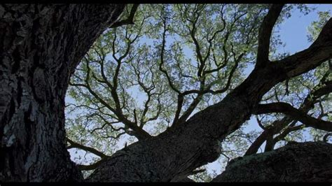 """Funeral Canticle (From """"The Tree of Life"""") - YouTube"""