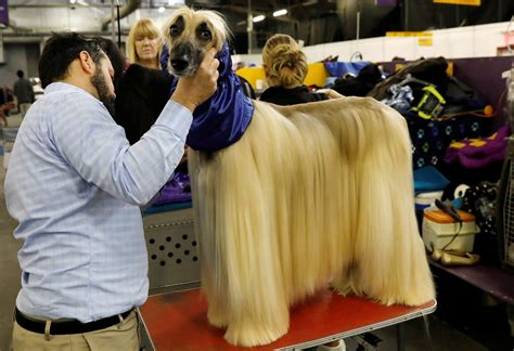 Best in Show? Cute backstage photos at America's biggest