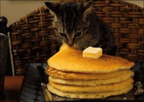 Pancake Stacks GIFs - Find & Share on GIPHY